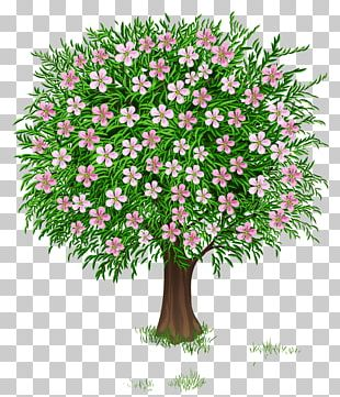 Tree PNG