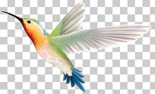 Hummingbird Wing Beak Feather PNG