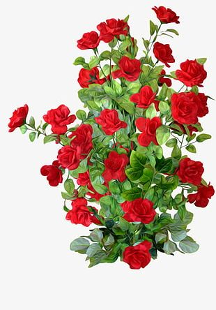 Red Rose Bushes PNG