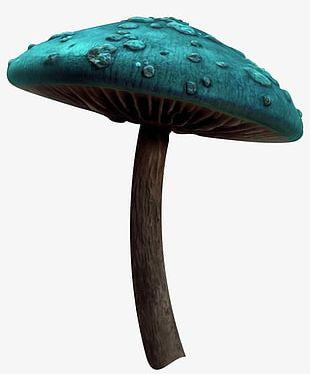 Mushroom Fairy Tale PNG