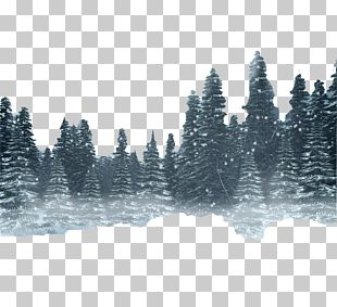 Snow Forest Winter PNG