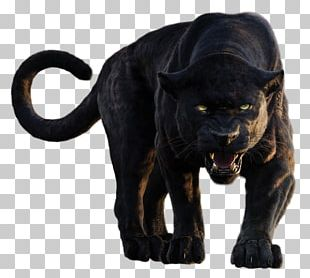 Bagheera The Jungle Book Shere Khan Baloo Mowgli PNG