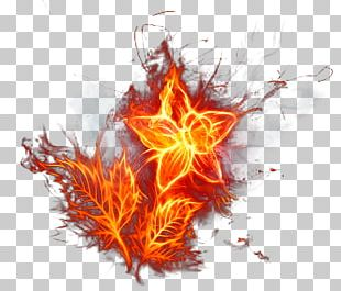 Flame Fire Light Flower PNG