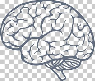 Human Brain Drawing Illustration PNG