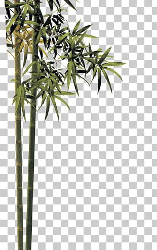 Qingming Bamboo PNG