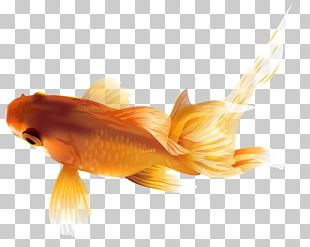 Black Telescope Fish PNG