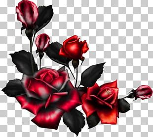 Rose Portable Network Graphics Flower PNG