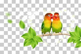 Parrot Lovebird Budgerigar PNG
