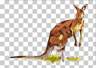 Boxing Kangaroo Macropodidae PNG