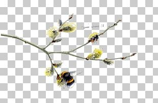 Twig Insect Plant Stem Flowering Plant PNG