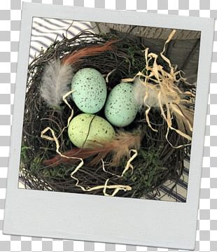 Bird Nest NEST+m Egg PNG