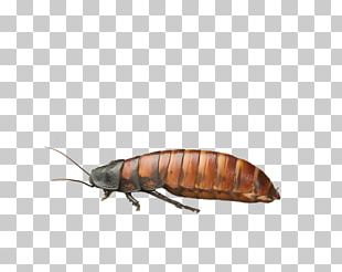 Look At Insects Ant PNG