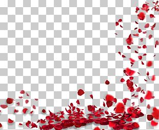 Rose Petal Flower PNG