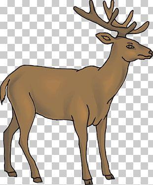 White-tailed Deer Reindeer Rudolph PNG