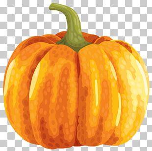 Zucchini Pumpkin Autumn PNG