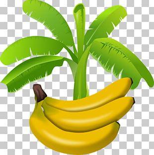Banana Pudding Saba Banana PNG