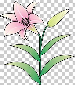Floral Design Lilium Cut Flowers Plant Stem PNG