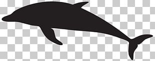 Dolphin Silhouette PNG