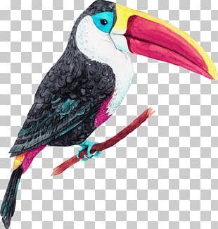 Jungle Island Bird Oiseaux Tropicaux Parrot PNG