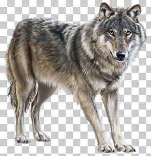 Mongolian Wolf Eurasian Wolf PNG