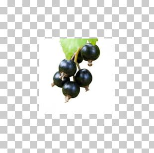 Bilberry Flavor Fruit Juice Liquid PNG