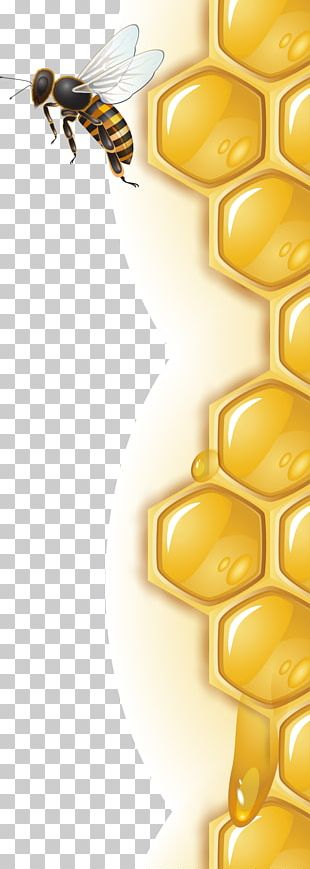 Honey Bee Honeycomb PNG
