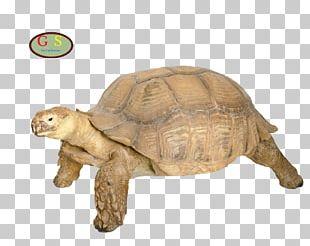 Box Turtle Tortoise Reptile M4 Sherman PNG