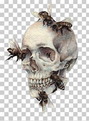 Human Skull Symbolism Bee Bone Drawing PNG