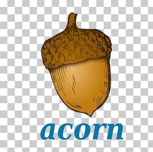 Acorn Flour Chinkapin Oak PNG