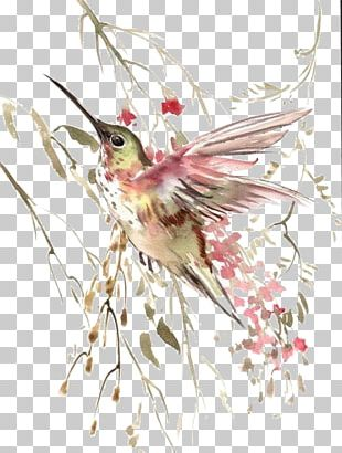 Hummingbird Flight Watercolor Painting PNG