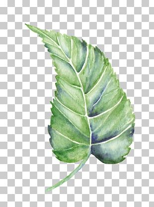 Leaf Watercolor Painting Shape PNG