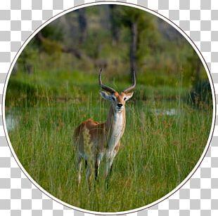 Kgalagadi Transfrontier Park Central Kalahari Game Reserve Okavango Delta Nature Reserve PNG
