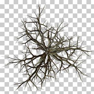 Tree Branch Snag PNG