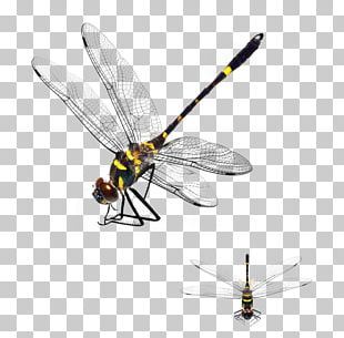 Dragonfly App Store PNG
