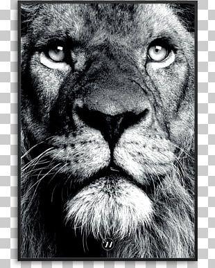 Lionhead Rabbit Stock Photography Bear PNG