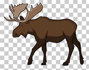 Moose Reindeer Wildlife Animal PNG