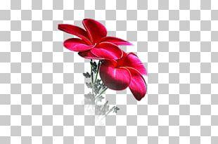 Flower Petal Floral Design Desktop PNG