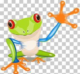 The Tree Frog Australian Green Tree Frog PNG