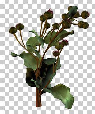 Flowerpot Plant Stem Leaf Flowering Plant PNG