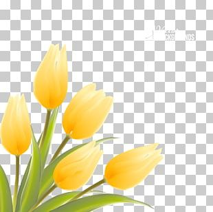 Indira Gandhi Memorial Tulip Garden Flower Illustration PNG