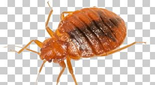 Beetle Mosquito Cockroach Bed Bug Pest Control PNG
