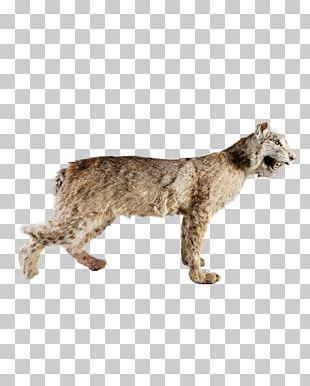 Bobcat Cougar Fur Big Cat PNG