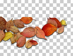 Deciduous Leaf Autumn Leaves PNG
