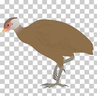 Galliformes Great Nicobar Island Bird Nicobar Megapode Great Nicobar Biosphere Reserve PNG