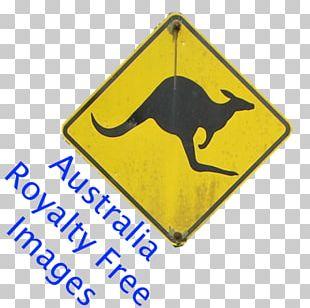 Boxing Kangaroo Australia Koala Stock Photography PNG