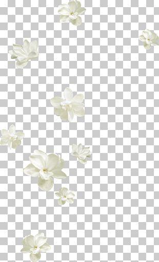 Flower Petal White PNG