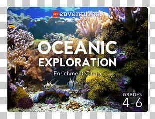 Coral Reef Stony Corals Pcs Edventures Ecosystem PNG