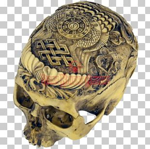Human Skull Human Skeleton Anatomy PNG