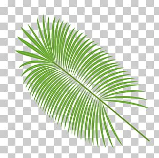 Palm Leaves Material PNG