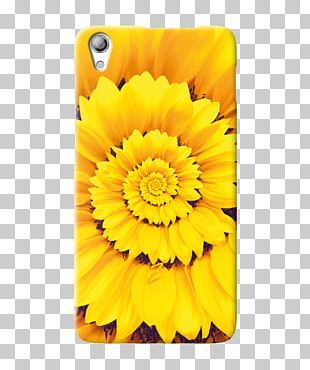 Transvaal Daisy Sunflower M Mobile Phone Accessories Marigolds Mobile Phones PNG
